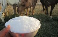 خواص شیر شتر - دکتر ملاحی