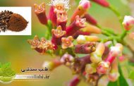 خواص دارویی گل میخک در طب سنتی