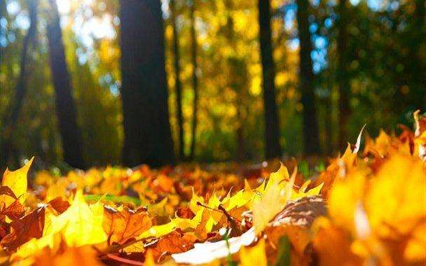 تدابیر فصل پاییز و طب سنتی