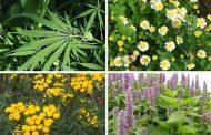 خواص گیاهان
