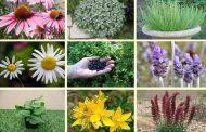 خواص گیاهان ( قسمت دو)